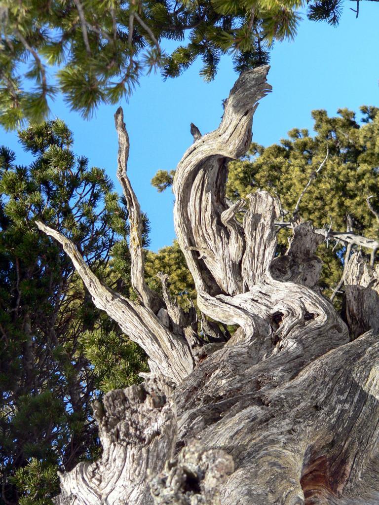 arbre JLV-1