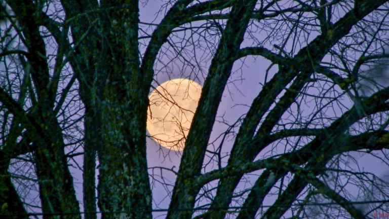 coucher de lune aux Finets