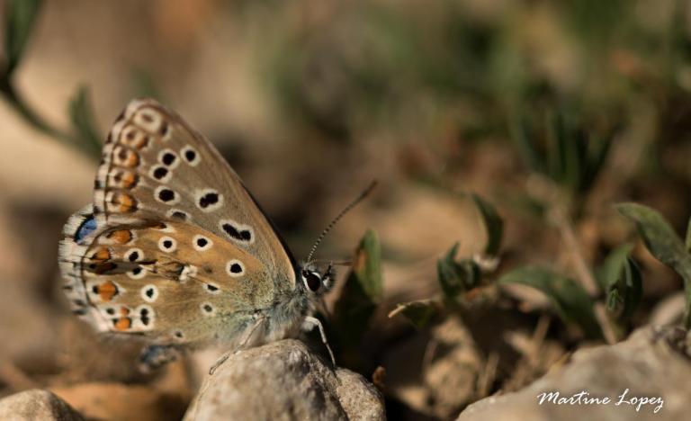 MO-papillon-4643