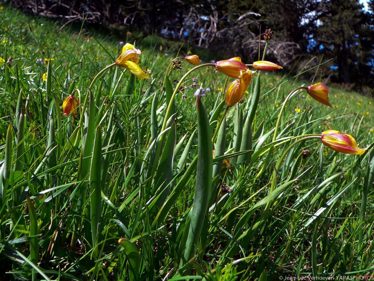 Flore et insectes