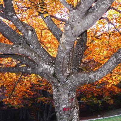 arbre lumineux vers chironne