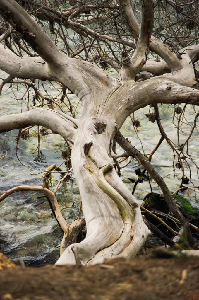 arbre de l'étang de Berre