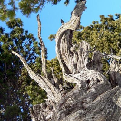 souche d'arbre sur Tourtre-Barreaux