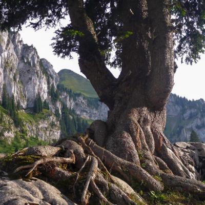 je m'accroche dans les Pyrénées