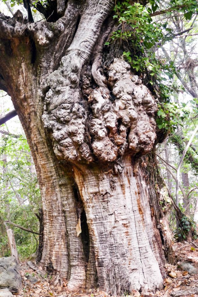 arbre JLV-16