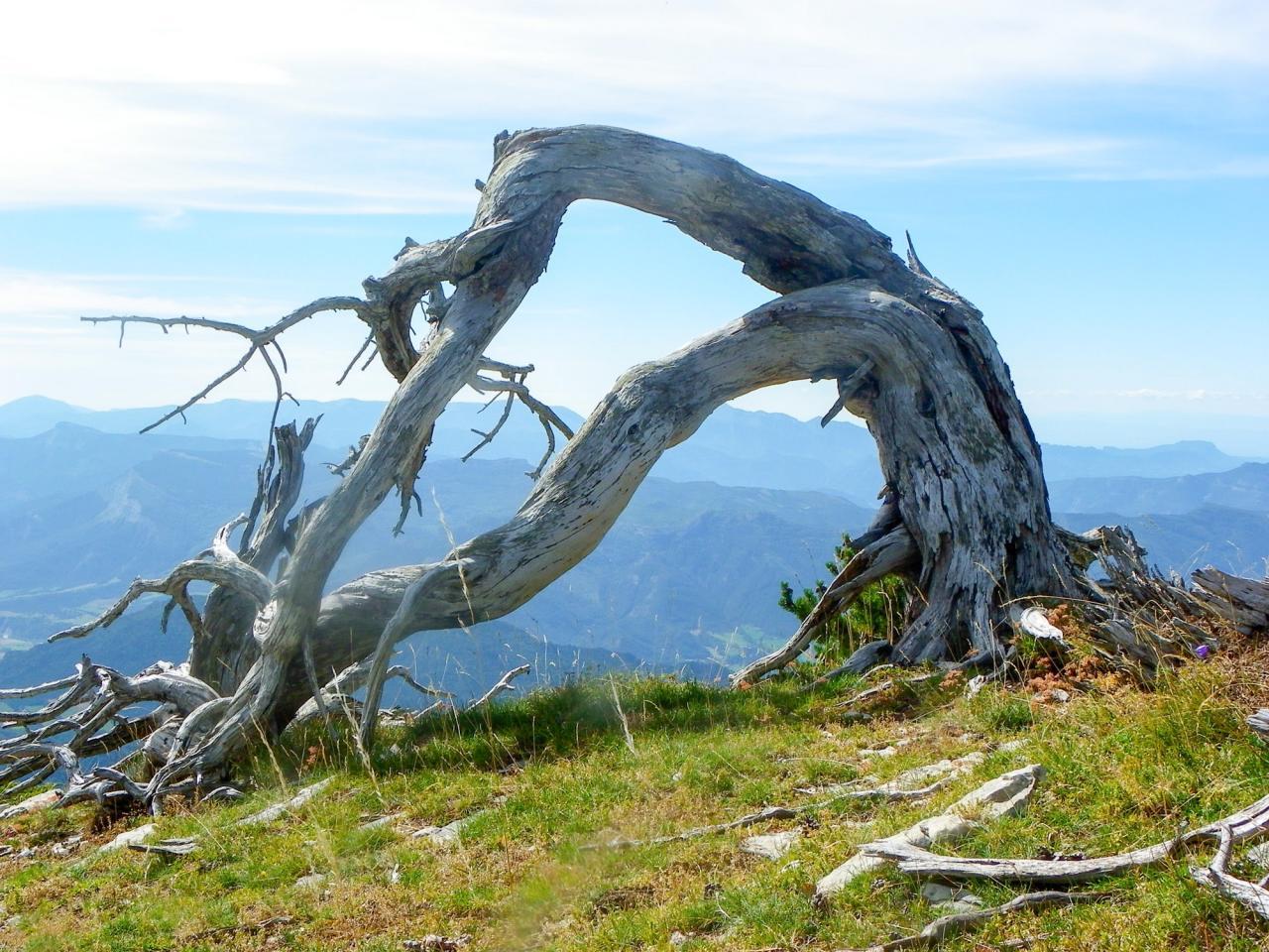 les arbres des rochers de plautrey