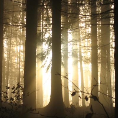 Lumières des bois...