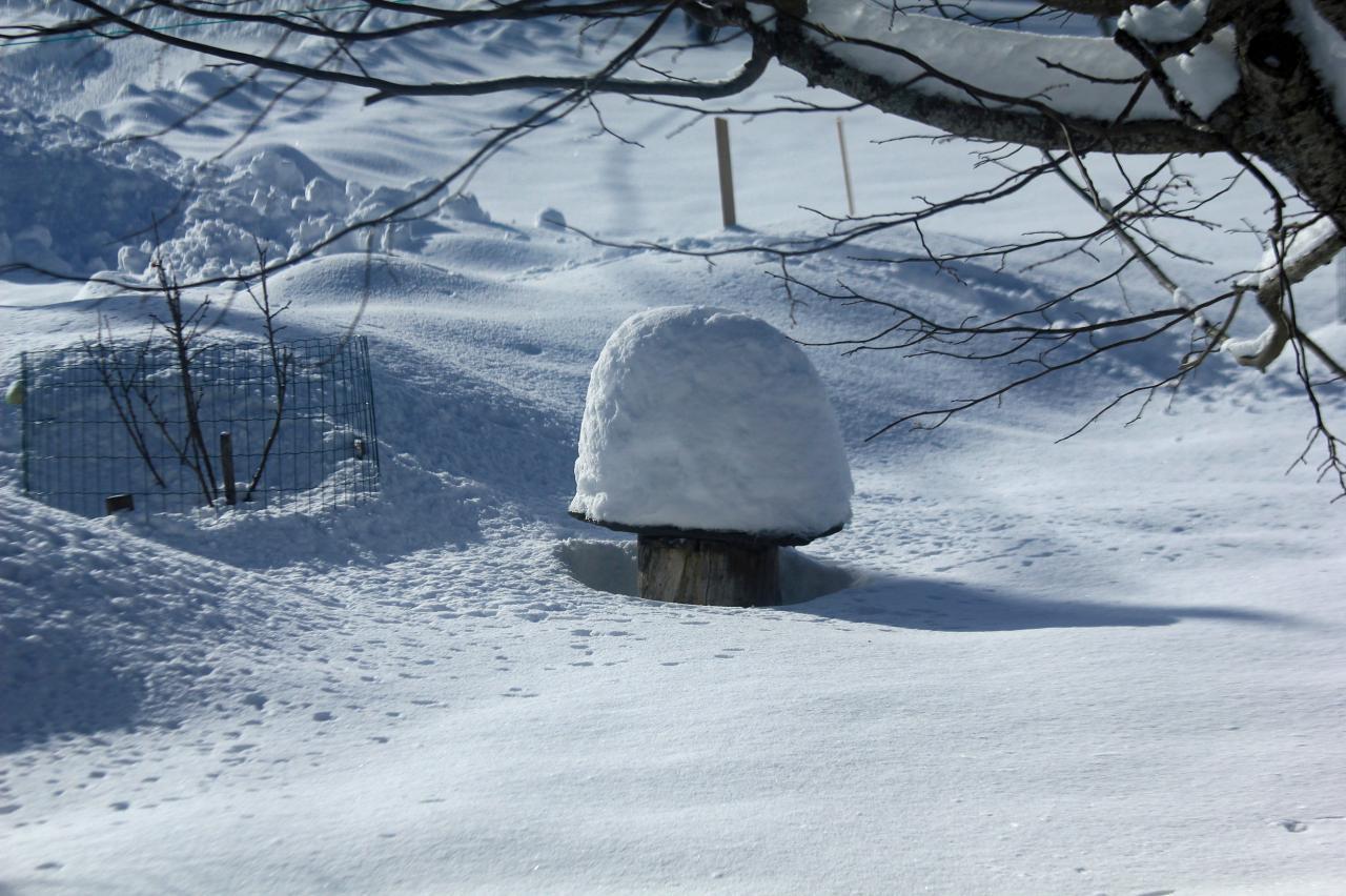 champignon d'hiver