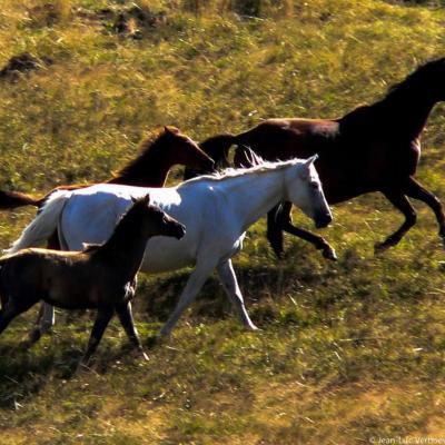 chevaux sur les Gagères