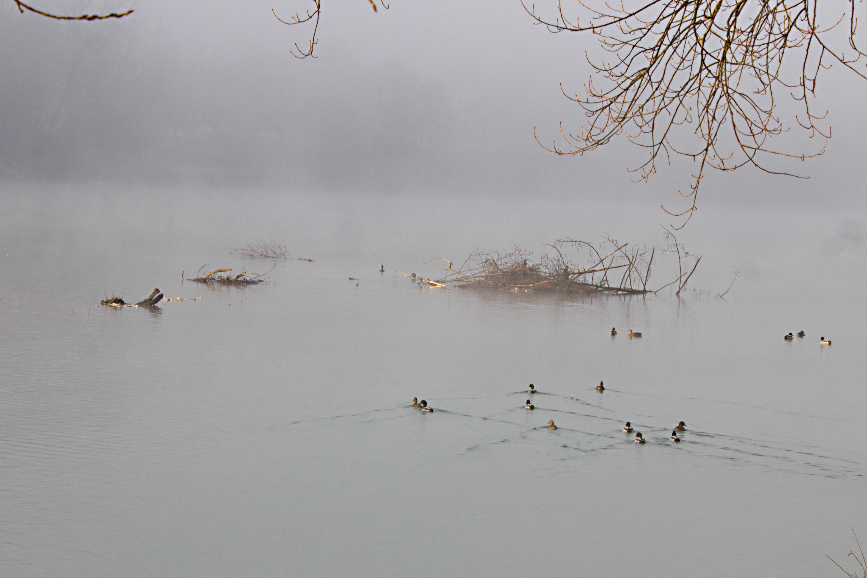 brume sur le lac