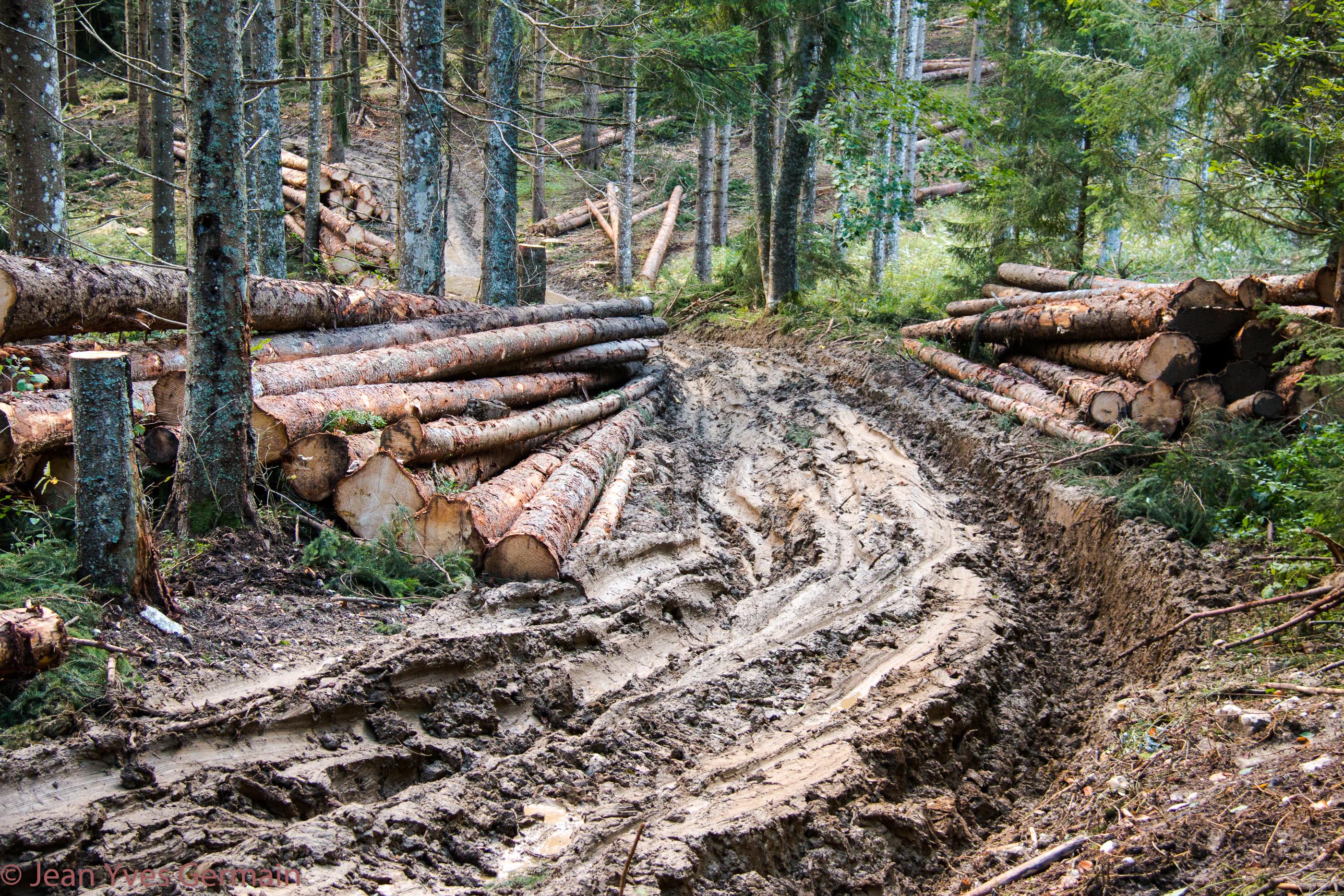 exploitation forestière à Revoulat