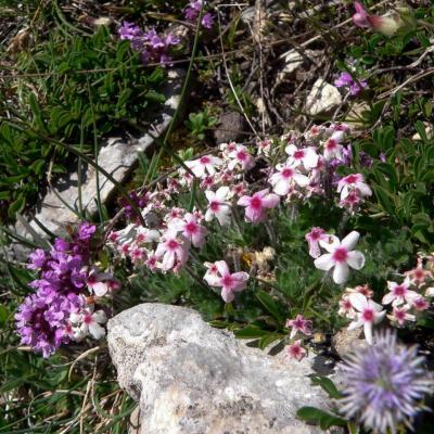 fleurs et rocaille