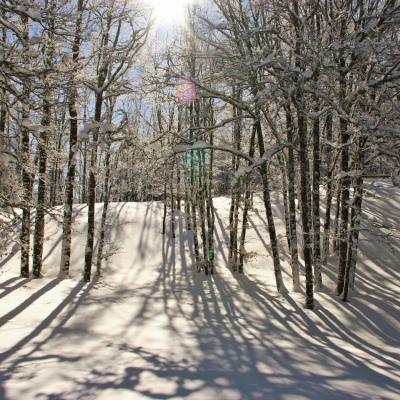 Foret l'hiver vers le but de nève