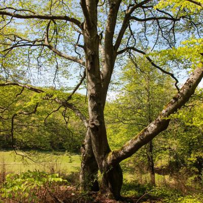 arbres remarquables