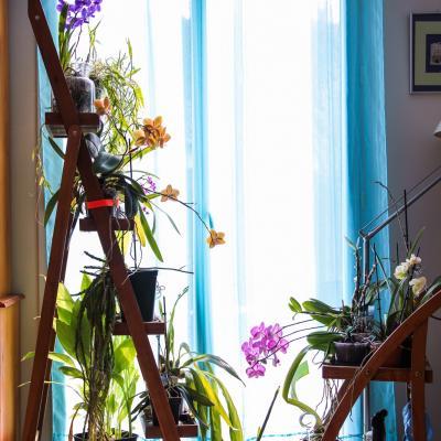 la fenêtre aux orchidées