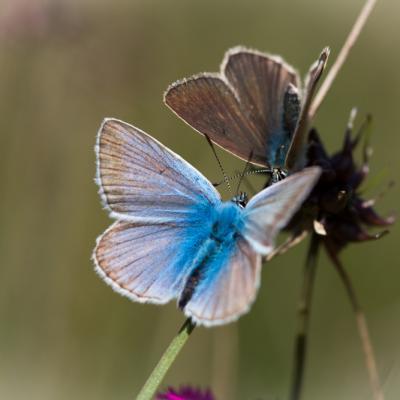 Couleur Bleu azur...