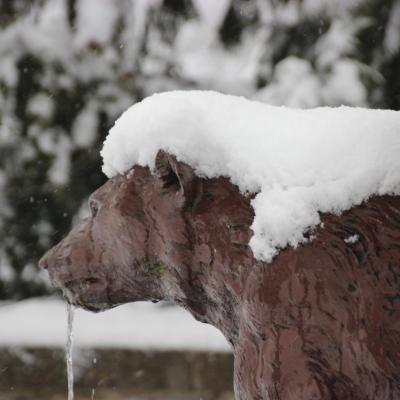 Chevelure de neige sur l'un des ours de la fontaine.