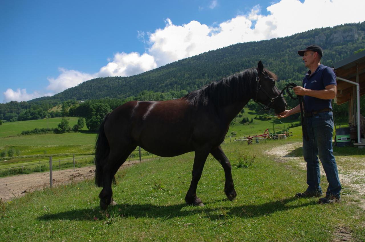 cheval Merens (chez Gilles Cavalli)
