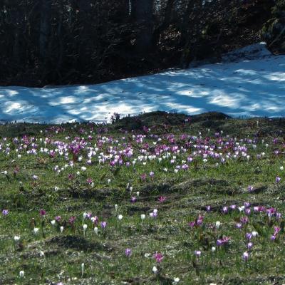 floraison aux gagères
