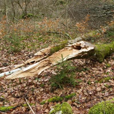 branches arachées dans la combe Freydière