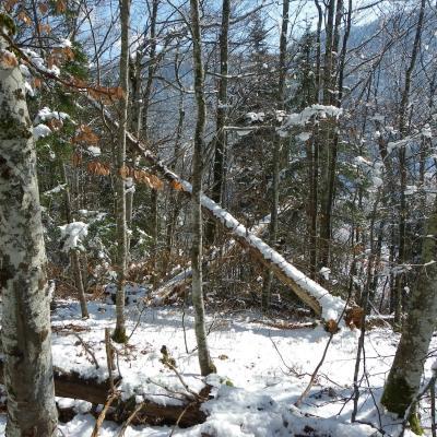 arbres fracassés vers les Chaberts