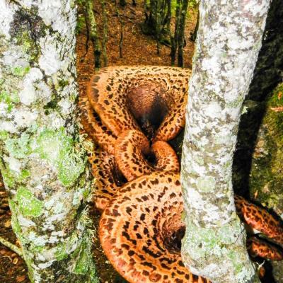 champignons de bois