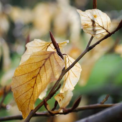 difficile de se débarasser de ses vieilles feuilles