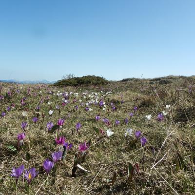 printemps aux gagères