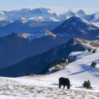 la montagnette en hiver (chevaux Meyrins)