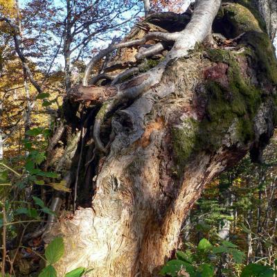 arbre porteur d'arbre