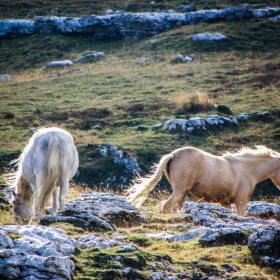 chevaux du montuet