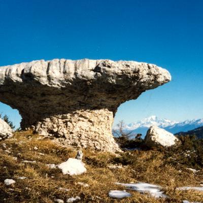 le champignon de pierre