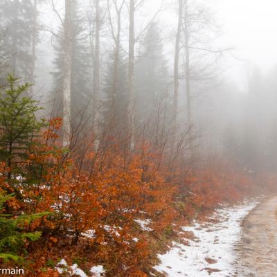 Brouillard à Fond d'Urle en janvier