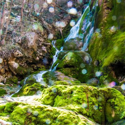 cascade verte en contre jour