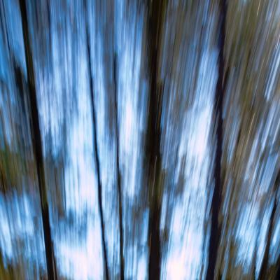 les arbres qui bougent