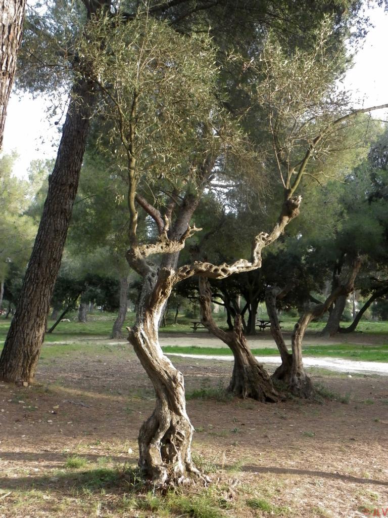 l'arbre qui dance