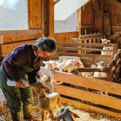 Laure et ses agneaux-2