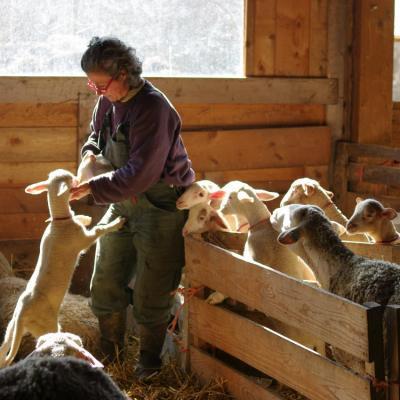 Laure et ses agneaux-3