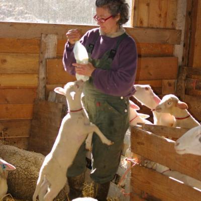 Laure et ses agneaux-4