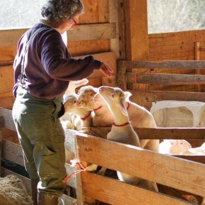 Laure et ses agneaux-5