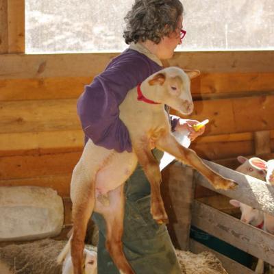 Laure et ses agneaux-7