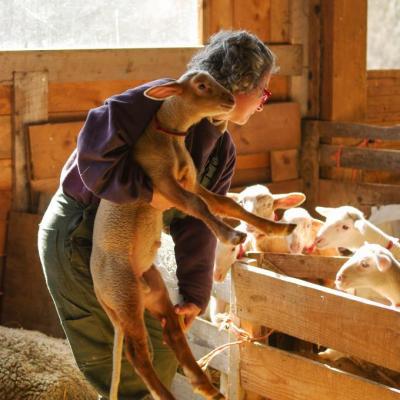 Laure et ses agneaux-8