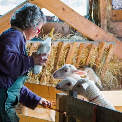 Laure et ses agneaux-9