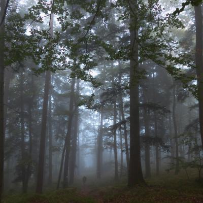 brume matinale forêt domaniale de saverne