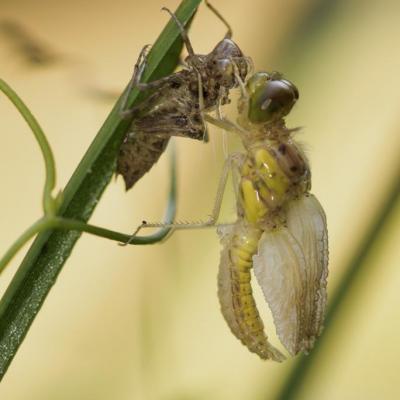 MO-libellules guinguette-4455
