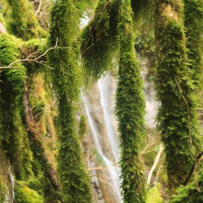 cascade mousse du Rif Bellay Saint julien en vercors
