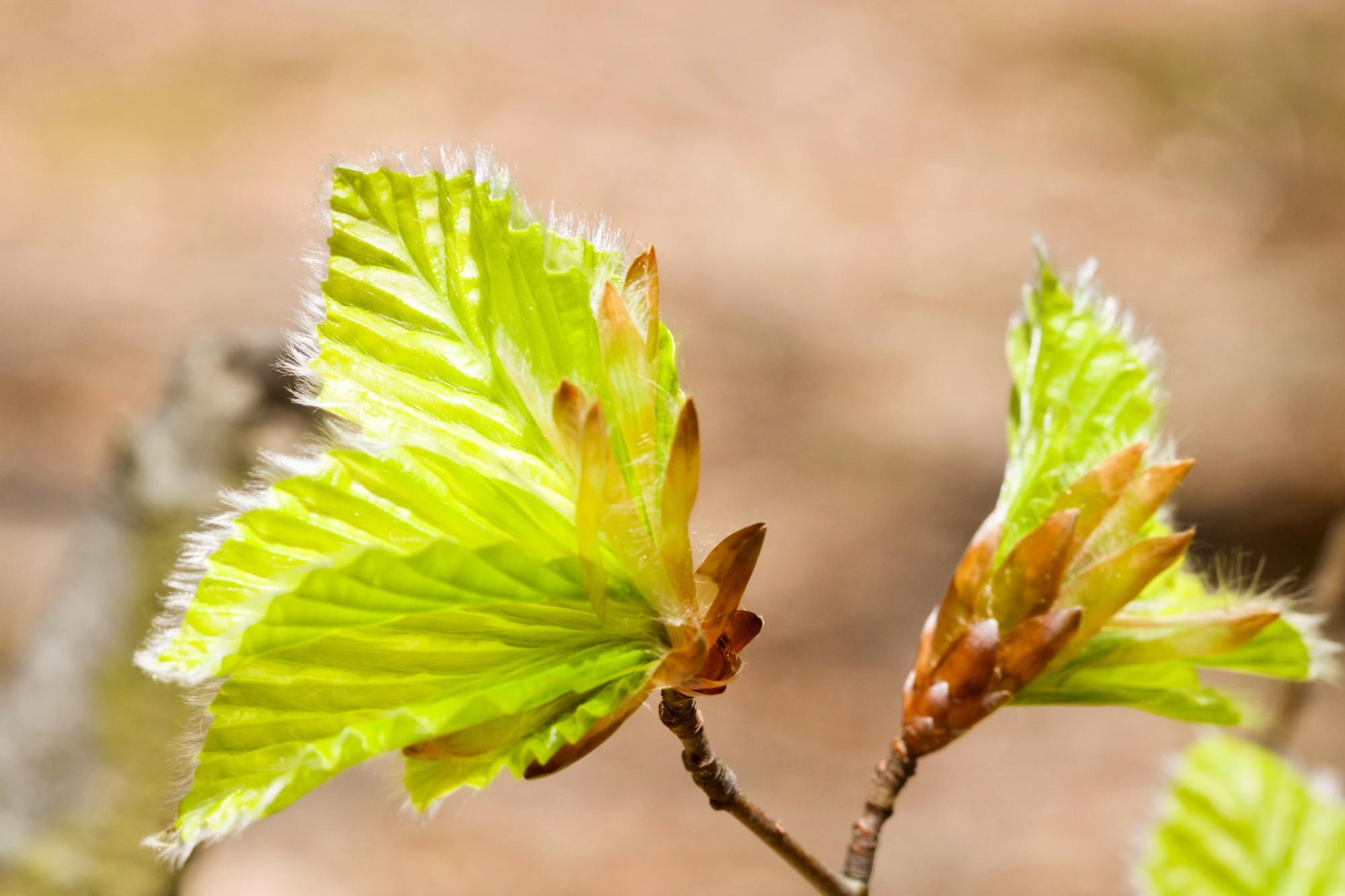 feuilles he tre