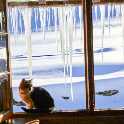 glaçons dehors chat dedans