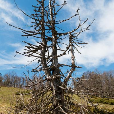 N44 917447 e5 341830 alt1409m arbre mort derbenouse r 2 sur 1