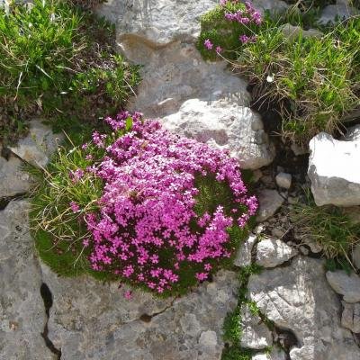 pierre fleuries